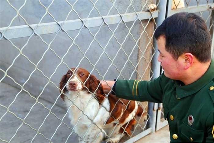 Zhang Yongheng, người huấn luyện chú chó Maomao