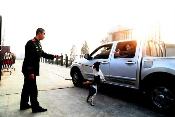 Zhang Yongheng, người huấn luyện chú chó Maomao từ khi còn rất nhỏ chia tay người bạn của mình