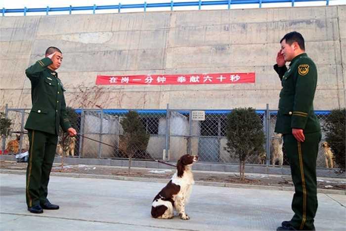 Zhang đã xuất ngũ sau khi hoàn thành thời gian nghĩa vụ quân sự của mình