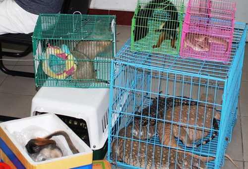 Nhiều động vật hoang dã bị phát hiện tại cửa hàng của Khoa - Ảnh: C.C.