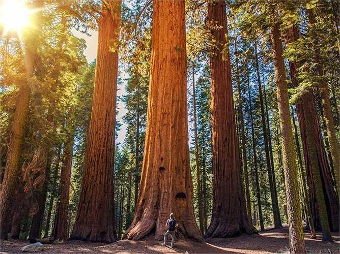 Bang California được biết đến với vườn quốc gia Sequoia, nơi có rừng cây gỗ đỏ khổng lồ được trồng cách  đây hàng trăm năm. Mỗi cây có chiều cao trung bình khoảng 100 mét.