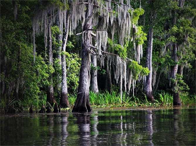 Các nhánh sông và đầm lầy tạo nên cảnh quan thiên nhiên độc đáo ở Bayou Bartholomew. Vùng ngập nước kéo dài hơn 600 mét là nơi sinh sống của nhiều động vật và thực vật bản địa.
