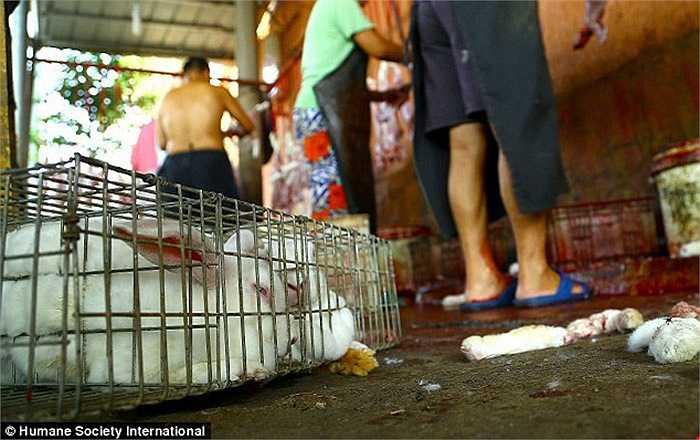 Cảnh các công nhân đang lNhững đồ dùng bằng lông thú thường rất đắt và chỉ có những người giàu có mới dám mua chúng. Lợi nhuận lớn khiến các xưởng lột da động vật ngày càng mọc lên nhiều ở Trung Quốc.ột da thỏ được chụp lén trong lò mổ ở Trung Quốc.