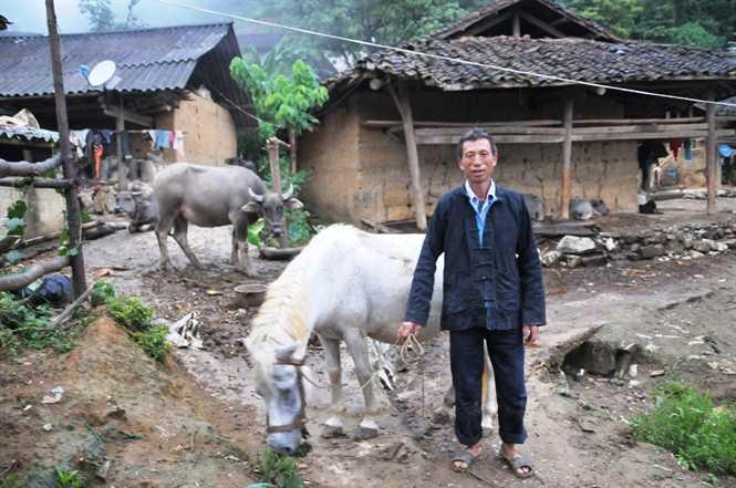 Thôn Sán Chá của người Thu Lao có thể xem như xứ sở hạnh phúc của trâu, ngựa