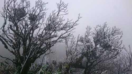 Sau khi nhiệt độ giảm sâu, hiện tượng băng giá đã xuất hiện trên đỉnh Phia Oắc, huyện Bình Nguyên, tỉnh Cao Bằng.