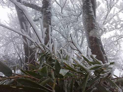Sau khi có thông tin Cao Bằng xuất hiện băng giá, rất nhiều bạn trẻ đã rủ nhau lên kế hoạch đến đây. Không ít người tỏ vẻ ngỡ ngàng trước khung cảnh trắng xóa tuyệt đẹp ở vùng núi cao này.