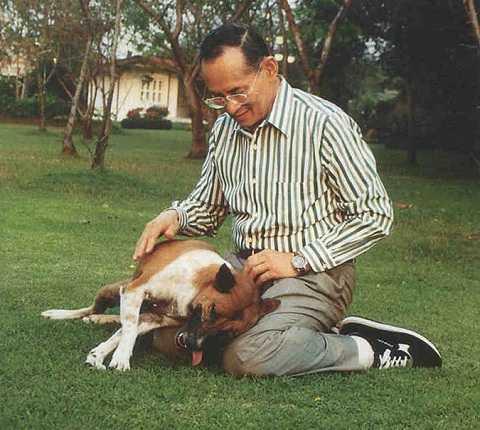 Quốc vương Thái Lan Bhumibol Adulyadej và con chó Tongdaeng