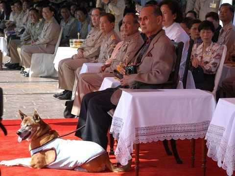 Quốc vương Thái Lan và chú chó cưng Tongdaeng theo dõi cuộc đua thuyền hồi năm 2008