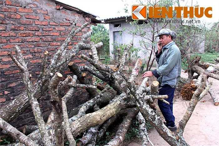 Một khách mua hàng và cũng là người có kinh nghiệm trồng đào lâu năm tại làng đào Nhật Tân (Hà Nội) cho biết: 'Thời điểm này khá thích hợp để ghép các mắt đào vì thời tiết thuận lợi. Sau khi ghép xong, những gốc đào 'khủng' sẽ có giá cao hơn rất nhiều, đến cả chục triệu đồng'.