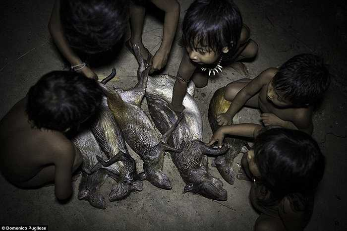 Trẻ em ở đây sinh ra và lớn lên với những loài động vật hoang dã