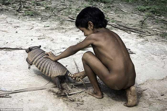 Động vật hoang dã được coi như những thú nuôi trong gia đình