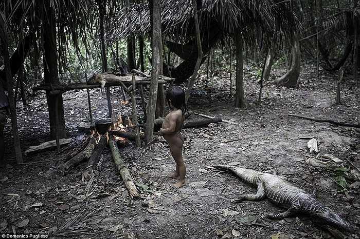 Các loài linh trưởng là một nguồn thức ăn của người Awa nhưng nếu một con khỉ là thú nuôi thì họ sẽ không ăn thịt nó