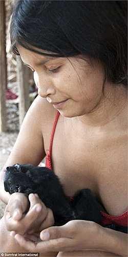 Người Awa được những loài động vật hoang dã giúp đỡ nhiều trong những công việc hằng ngày hái quả