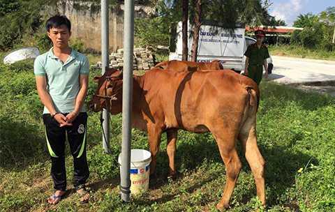 Quảng Nam, Triệt phá đường dây, trộm bò liên huyện, công an