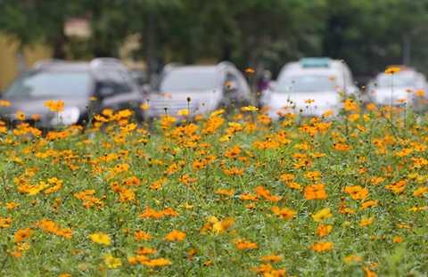 Đường Trần Duy Hưng cùng với đường Nguyễn Chí Thanh, được khánh hoàn thiện và đưa vào hoạt động trên 10 năm qua, được coi là tuyến đường đẹp nhất, hiện đại nhất thủ đô thời điểm đó. Dải phân cách giữa tuyến đường là thảm cỏ rộng, được trang trí vườn hoa, cây cảnh.