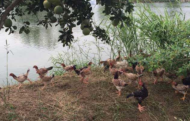 Để có nguồn thực phẩm sạch, họ phải tìm mua thực phẩm do người thân ở quê nuôi trồng