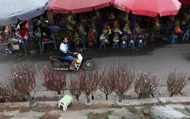 Tại chợ hoa Quảng An (Tây Hồ, Hà Nội), những cành đào nở hoa đỏ rực đã được người trồng hoa Nhật Tân bày bán.