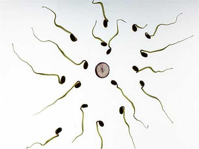 Nhiệt độ cao không tốt cho tinh trùng: Tinh trùng số có xu hướng thấp nhất trong những tháng mùa hè và cao nhất trong những tháng mùa đông. Vì vậy tốt nhất là nam giới nên tiêu thụ nhiều thực phẩm lành mạnh trong tháng mùa hè, sẽ giúp chất lượng tinh trùng tốt hơn.
