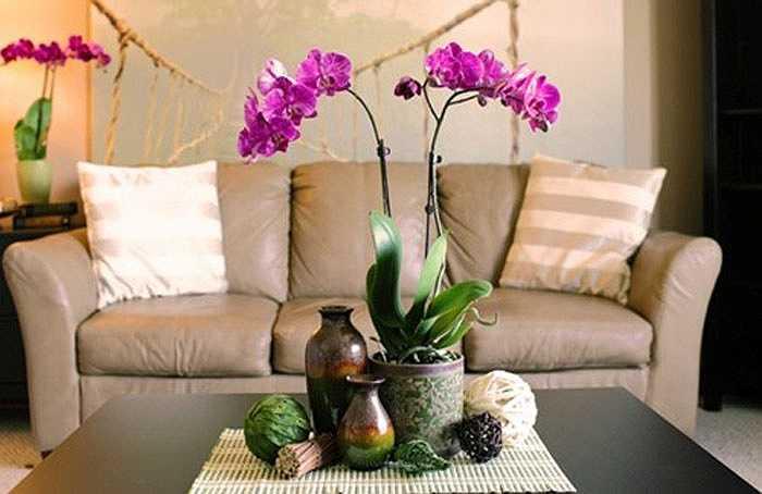 Một loài hoa nữa có thể bạn nên cân nhắc mua ngày tết đó là hoa lan. Chúng biểu tượng cho sự thanh cao, tinh khiết. Vẻ đẹp của hoa lan được coi là biểu tượng cổ điển tượng trưng cho sự sinh sôi nảy nở trong phong thuỷ.