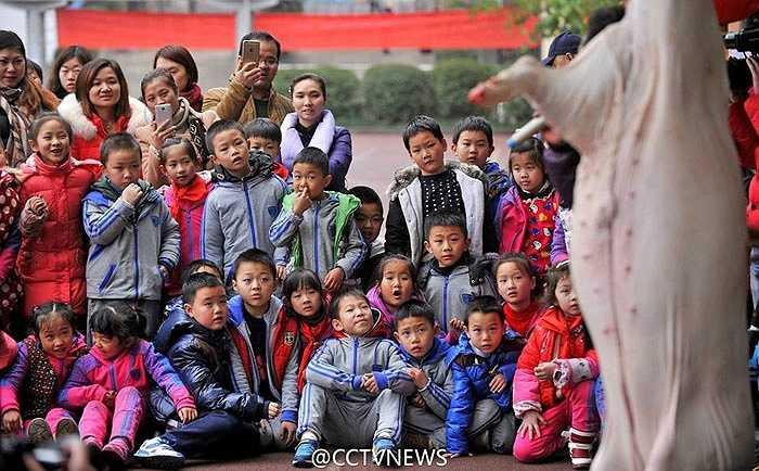 Nhiều phụ huynh khẳng định chương trình này rất cần thiết để trẻ nhỏ có thêm kiến thức về giải phẫu động vật và thêm hiểu, trân trọng giá trị truyền thống. Trong khi đó, trường học đưa ra lời giải thích con lợn đó không được mổ trước mặt học sinh, đây chỉ là một bài học cho học sinh thành phố gần gũi với truyền thống. (Nguồn: CCTVNews)