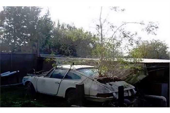 Cây dại mọc trên xác của một chiếc Porsche 911 đời đầu.