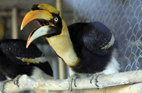"""Anh thổ lộ: Tôi lấy tên loài chim này để đặt cho trang trại của mình. Người Việt có quyền tự hào về rất nhiều loài chim quý, đặc hữu nhưng vấn đề là chúng ta cần biết trân trọng, bảo tồn""""."""