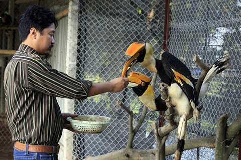 Hiện trang trại của anh Giáp có hơn chục con chim Lạc Hồng. Đây là loài chim anh không bán, chỉ để lại trang trại để nuôi và nhân giống.