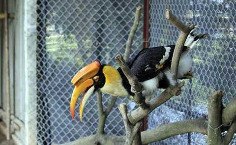 Việc nuôi chim Lạc Hồng khá tốn khém và việc nhân giống chim này gặp nhiều khó khăn, tỉ lệ thành công chưa cao.