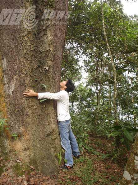Cây cổ thụ trong rừng cấm Pờ Ly Ngài
