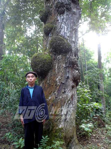 Nhiều thân cây u cục kỳ quái