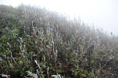 Sáng sớm 23/1, băng giá bắt đầu xuất hiện trên đỉnh Mẫu Sơn (Lộc Bình, Lạng Sơn).