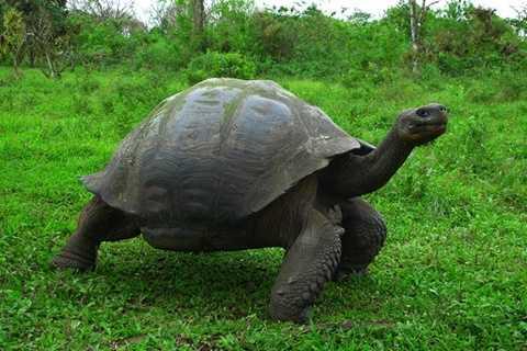 Rùa khổng lồ Aldabra, tên tiếng Anh là Aldabra giant tortoise, tên khoa học là Aldabrachelys gigantea, là một trong những loài rùa cạn lớn nhất trên thế giới. Khi trưởng thành, loài rùa này có thể nặng tới 360kg và dài đến 1,5m.