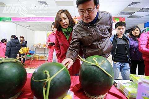 Trung bình mỗi quả dưa có trọng lượng khoảng 5 kg và có giá khoảng 350.000 đồng/quả.