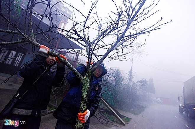 Người lên miền núi mua đào chủ yếu là dân buôn từ Hà Nội, Hải Phòng. Họ thường chọn cả cây lớn, sau đó đem cắt nhỏ từng cành. Có cây rao bán trên 20 triệu, cành nhỏ dao động từ 1 đến 5 triệu đồng.