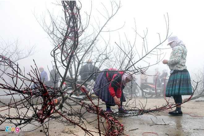 Quốc lộ 6 đoạn từ Mộc Châu về Hoà Bình tràn ngập đào rừng dọc hai bên đường những ngày giáp Tết âm lịch.