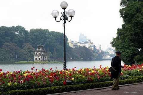 Những vườn hoa đón tết khoe sắc bên Hồ Gươm