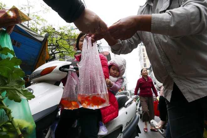Cũng giống như mọi khu chợ khác, cá chép đỏ là mặt hàng không thể thiếu ở chợ Hàng Bè...