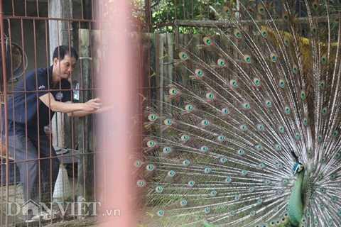 Một khách tham quan chụp hình tại trại công của anh Tuấn