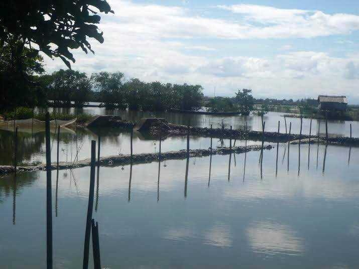 Một số vùng nước trong rừng ngập mặn nguyê sinh Rú Chá được tận dụng để nuôi tôm mang lại nguồn lợi sinh kế cho người dân.