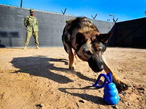 Trong quá trình luyện tập những chú chó buộc phải vượt qua được ngưỡng chịu đựng của mình