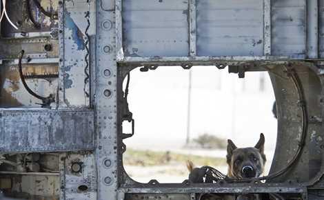 Trên chiến trường, những chú chó nghiệp vụ là tài sản vô giá, chúng có thể đánh hơi được vật liệu nổ một cách chính xác, giúp tránh hàng loạt thương vong
