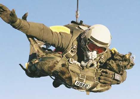 Những chú chó được đeo vào phía ngực của binh sỹ khi nhảy dù