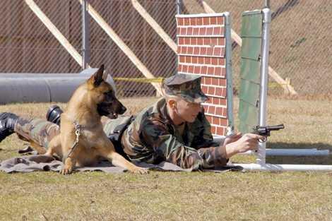 Tiếp theo là cho những chú chó làm quen với âm thanh chiến trường