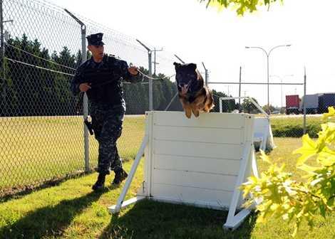 Sau đó, chó nghiệp vụ được huấn luyện vượt chướng ngại vật và làm quen với nhiều dạng địa hình chiến đấu