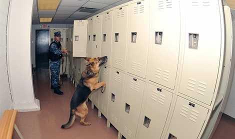 Những chú chó và người huấn luyện gắn bó với nhau trong quá trình luyện tập