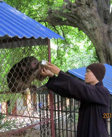 Sư Mơ cho khỉ ăn
