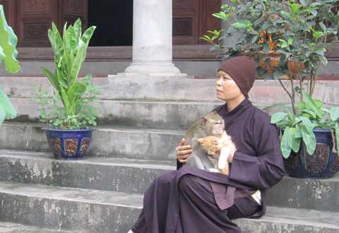 Sư Thích Diệu Mơ thực sự là người mẹ của bầy khỉ