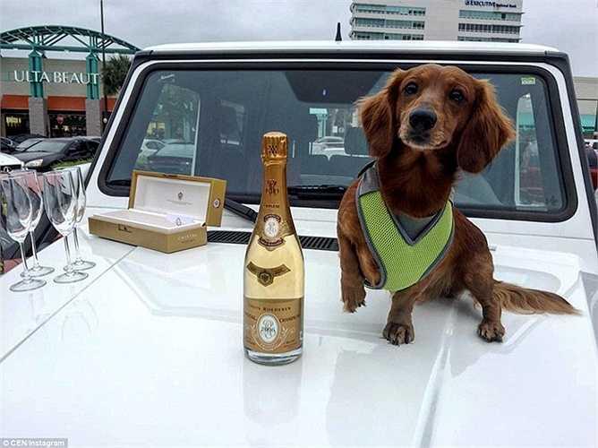 Bức ảnh thể hiện cuộc sống hưởng thụ của 1 người trẻ ở Nga. Trên mui xe là 1 chai champagne, 1 chú chó và những chiếc ly