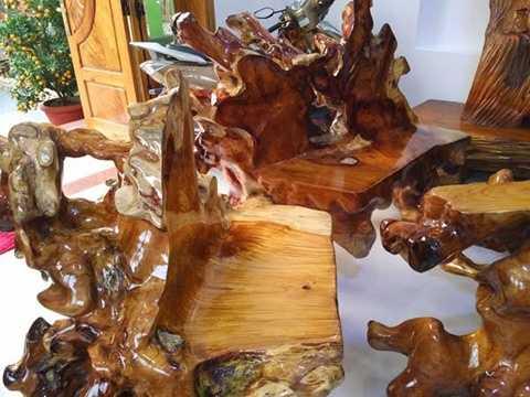 Những chiếc ghế cũng được làm từ một phần dễ của cây huỳnh đàn khủng này