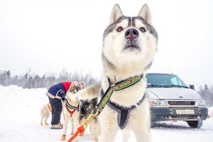 Những chú chó được chuẩn bị đồ đạc cẩn thận trước khi khởi hành